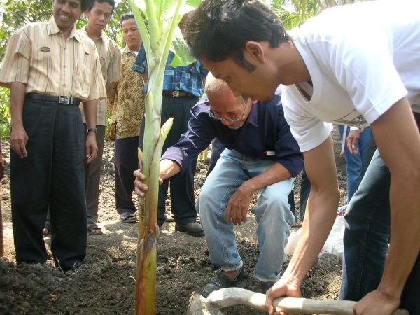 Penanaman pohon pisang di Demplot budidaya pisang DPW SPI Yogyakarta (30/8)
