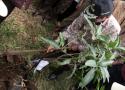Penanaman pohon oleh Gubernur Sumatera Barat, Irwan Prayitno di lahan perjuangan SPI Sumatera Barat