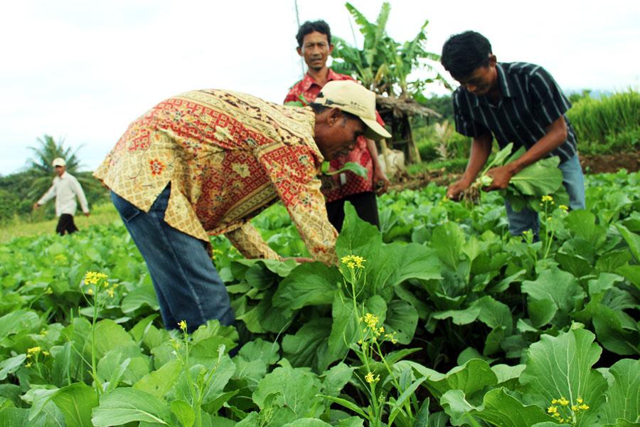 Kebijakan Salah Arah Serikat Petani Indonesia