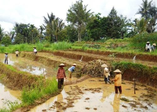 Tanah Ulayat SPI Sibaladuang