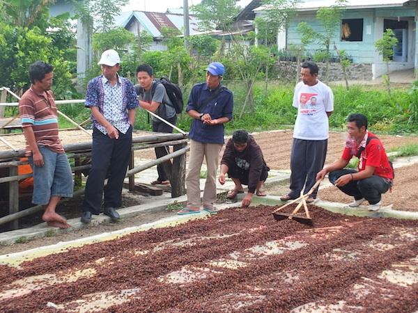 Penjemuran kopi menggunakan terpal di atas tanah